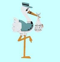 Boy Stork Rentals Columbia SC